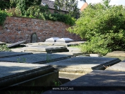 Coronation Garden Beverley