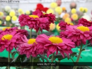 Flower and Vegetable Show