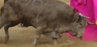 800px-Bullfight-Bogotá