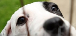 Dog owners across the East Riding looking for day care or boarding facilities should check to make sure the businesses they are using are licensed and insured.