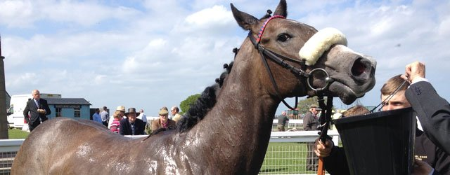 Beverley Races : Angel Delight For Dods
