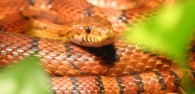 6 Exotic Pets You Didn't Know You Wanted