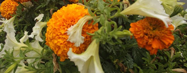 Bishop Burton Gardeners Start 2016 Season With Chrysanthemum Talk