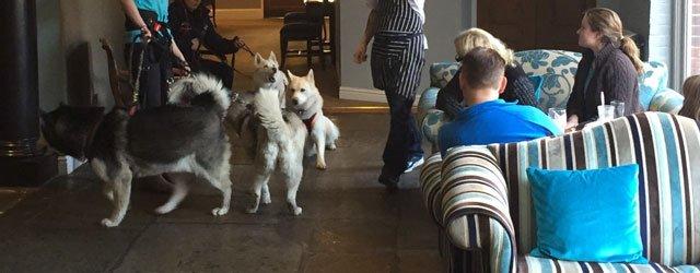 Beverley Arms Rescues Yorkshire Husky Meet