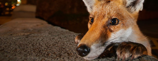 World Famous Wildlife Photography Exhibition To Be Hosted In Beverley