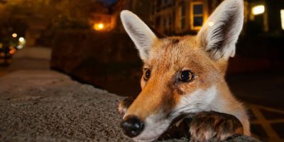 Wildlife Photographer Of The Year Exhibition In Beverley Now Open Every Sunday