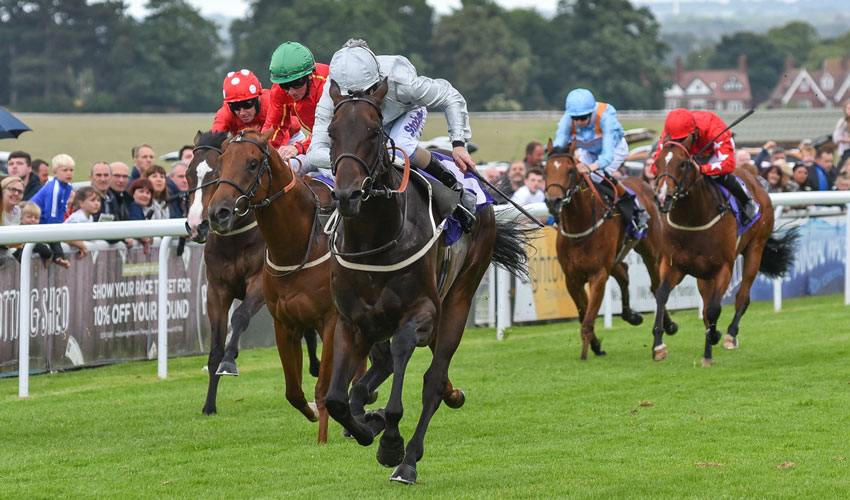 BEVERLEY RACES : Cardsharp Holds All The Aces At Beverley