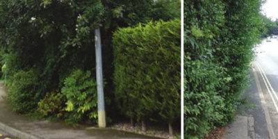 Residents Urged To Cut Back Hedges And Trees Causing Obstructions