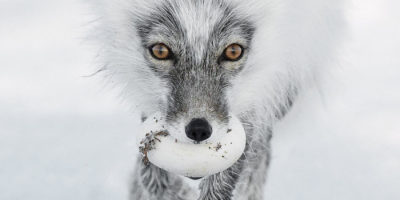 Wildlife Photographer Of The Year Exhibition Heads Back To Beverley