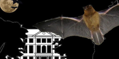 Bat Night At Sewerby Hall And Gardens