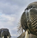 Wildlife Photographer Of The Year Exhibition Will Return To Beverley