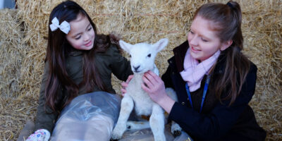 Lambing Sunday Returns To Bishop Burton College This Month