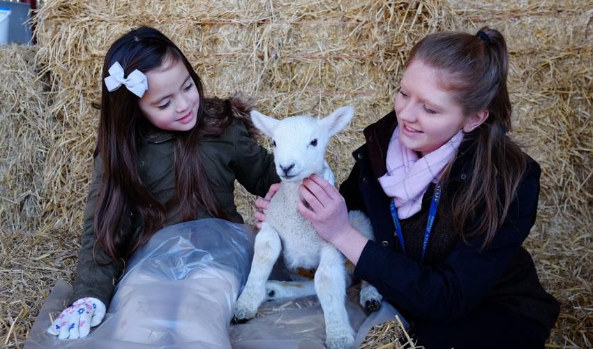 Lambing Sunday Returns To Bishop Burton College This Month