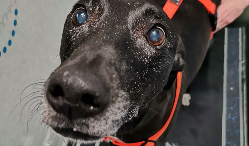 Canine Hydrotherapy CentreGets Twitter Boost From Theo Paphitis