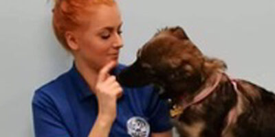 Fit4DogsUK Employee Shortlisted For People in Business Award