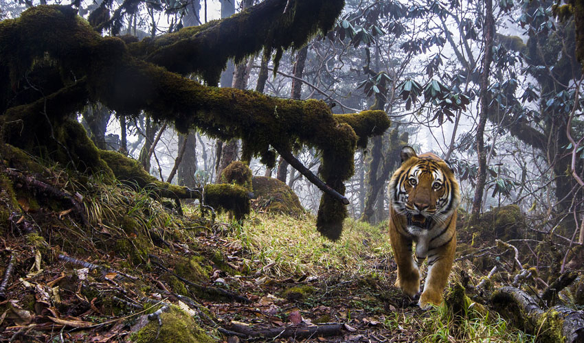June Sees Return Of Popular Wildlife Photographer Of The Year Exhibition
