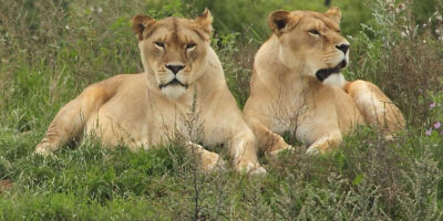 Yorkshire Wildlife Park – A Wonderful Day Out For All The Family
