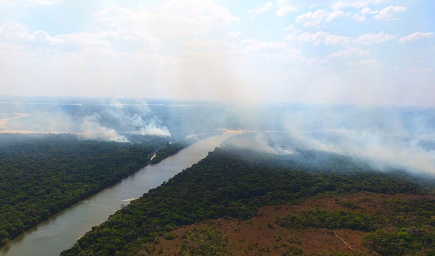 Brazil Forest Fires Threaten Project Sponsored By Yorkshire Wildlife Park Foundation