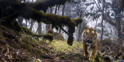 Last Chance To See Wildlife Photographer Of The Year Exhibition