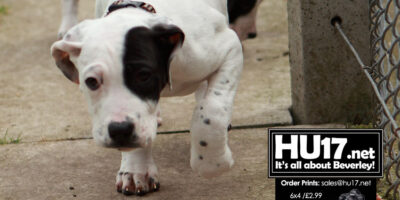 Lucy's Law Makes Animal Breeders Directly Accountable