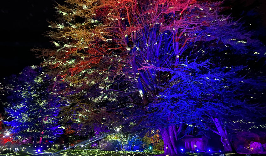 A Chance To Experience The Enchanted Winter Woodland At Sewerby Hall