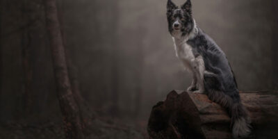 East Yorkshire Photographer Named Pet Photographer Of The Year