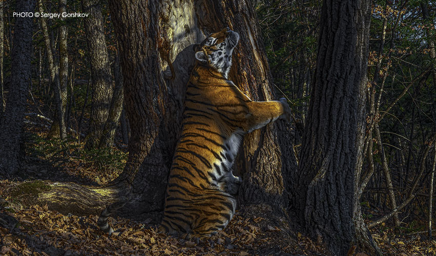 Wildlife Photographer Of The Year Exhibition Will Be At Sewerby Hall And Gardens In 2021