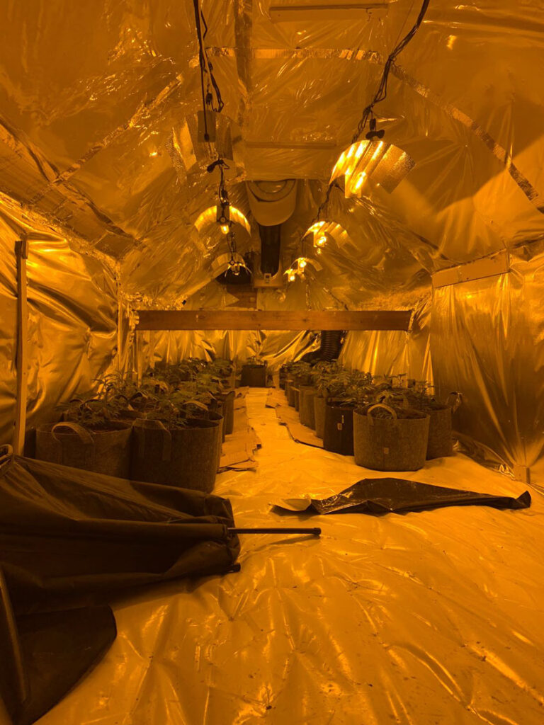 Large Cannabis Factory Found On The Leases In Beverley
