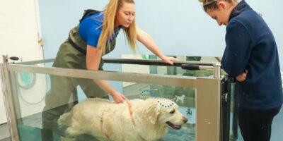 Covid-19 Pandemic Fuels Pet Obesity